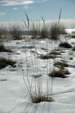 Winter by the beach Royalty Free Stock Photo
