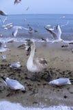 Winter beach birds Royalty Free Stock Photo
