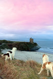 Winter beach and castle view with dogs Royalty Free Stock Photography