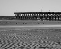 Winter at the beach. Even the seagulls look cold on this windswept beach in Cherry Grove, SC Stock Photos