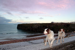 Winter beach view with two dogs Royalty Free Stock Photos