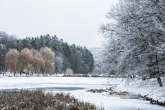 Winter beautiful day in park near frozen lake Royalty Free Stock Photography