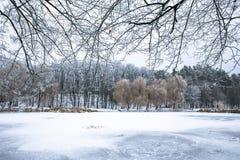 Winter beautiful day in park near frozen lake stock image