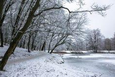 Winter beautiful day in park near frozen lake royalty free stock photo