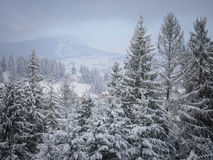 Winter beautiful forest. Beautiful winter forest, which I photographed in the mountains Royalty Free Stock Photos