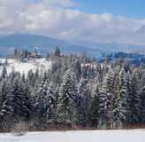 Winter beautiful forest Stock Images