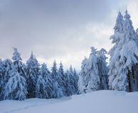 Winter beautiful forest Stock Image