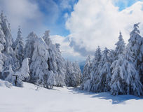 Winter beautiful forest Royalty Free Stock Photos