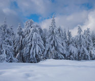 Winter beautiful forest Royalty Free Stock Images