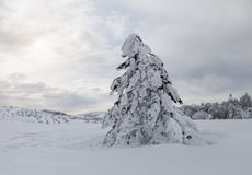 Winter beautiful forest Royalty Free Stock Image