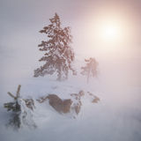 Winter beautiful forest Stock Photos