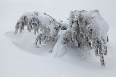 Winter beautiful forest Royalty Free Stock Photo