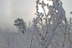 Winter. Beautiful russian winter in sunny day Stock Photography