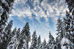 Winter beautiful scene Royalty Free Stock Photos