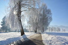 Winter. Beautiful winter in south Germany close to the alps. Frozen Landscape with sunny weather and blue sky Stock Images