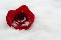 Winter beauty Royalty Free Stock Photos