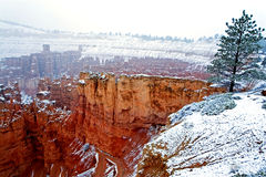 The winter beauty of Bryce Canyon, Utah Royalty Free Stock Photo