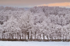 Winter beauty - forest and sunset Royalty Free Stock Images