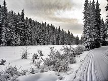 Winter beauty Royalty Free Stock Images