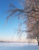 Winter beauty -  nature Royalty Free Stock Image
