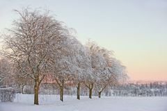 Winter beauty -  nature Stock Photos
