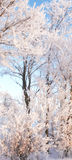 Winter beauty -  nature Stock Images