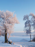 Winter beauty -  nature Royalty Free Stock Photography