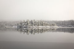 Winter beauty. Reflection of snow coated trees in lake that has just started to freeze over Stock Images
