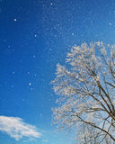 Winter Beauty. A wintery scene of a cold day as snow flutters from it high perch in the tree stock images