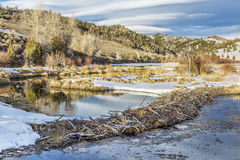 Winter on beaver swamp Royalty Free Stock Photography