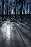 Winter beech forest Royalty Free Stock Photo