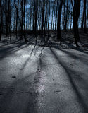 Winter beech forest Royalty Free Stock Photography