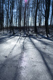 Winter beech forest Royalty Free Stock Images