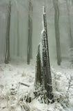 Winter beech forest Stock Photos