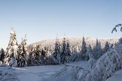Winter bellow Lysa hora hill in Moravskoslezske Beskydy mountains in Czech republic royalty free stock photo