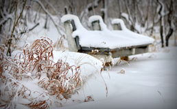 Winter. Bench. Snow Royalty Free Stock Photography