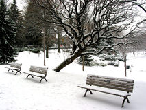 Winter benches Stock Images