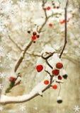 Winter berry stock image