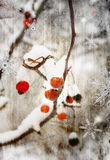 Winter berry. Winter background with ash berry stock illustration