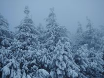 Winter in Beskydy. Frozen trees after snowstorm in Beskydy Stock Photography
