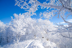 Winter in Bieszczady, Poland. Stock Photo