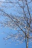 Winter-Bilder: Baum u. eisige Rückgänge - Fotos auf Lager Stockfotos