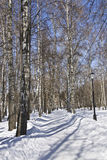 Winter, birch avenue Stock Photography