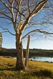 Winter birch by lake Royalty Free Stock Photo