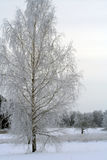 Winter birch and lake Stock Images