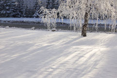 Winter birch tree Stock Photography