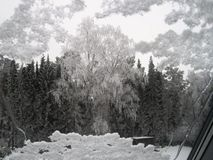 Winter. A birch tree. Royalty Free Stock Images