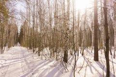 Winter Birch Wood Royalty Free Stock Photos