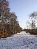 Winter birch woods Stock Photos