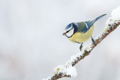 Winter Bird Stock Images
